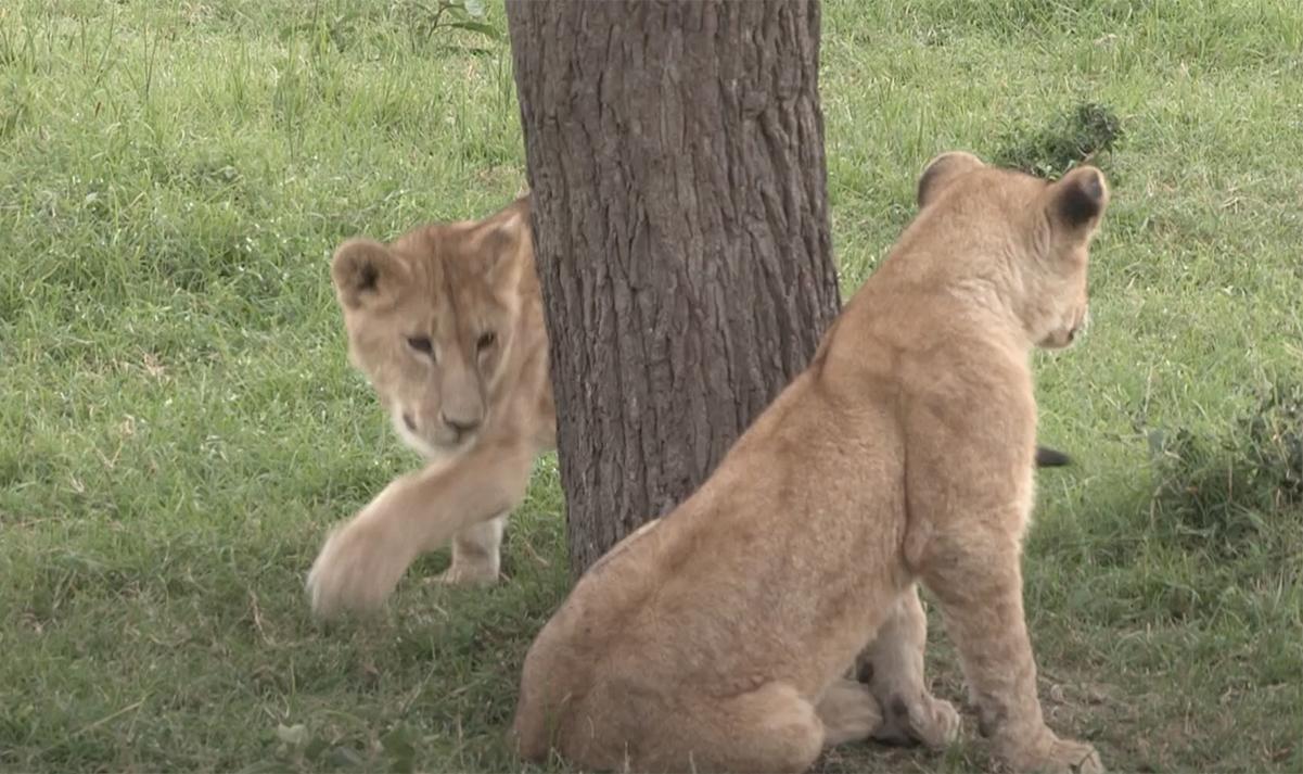 Bekijk hier de video van Wat niet in de Safarigids van je ouders staat